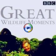 Great Wildlife Moments