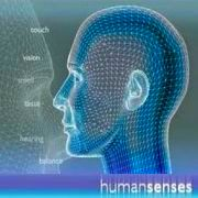 Human Senses about Smell, Taste, Hearing, Balance, Touch, Vision