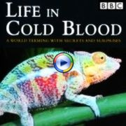 BBC Life in Cold Blood series
